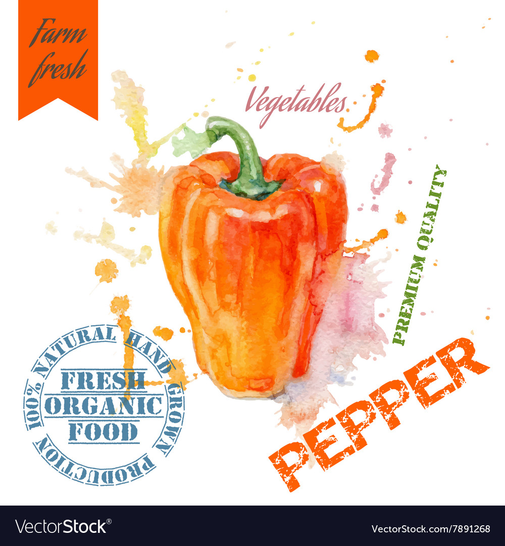 Pepper watercolor banner vector