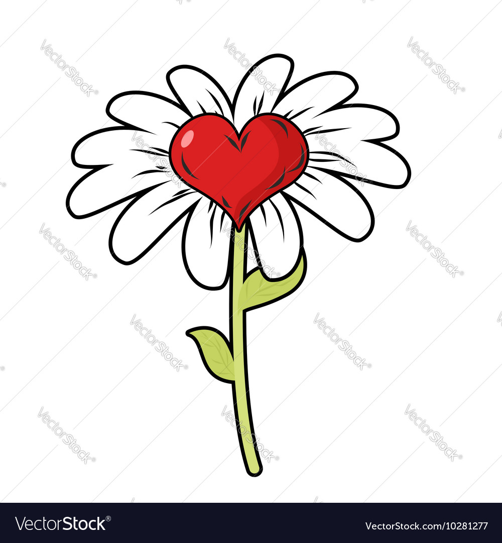 Flower of love red heart symbol of love and daisy vector