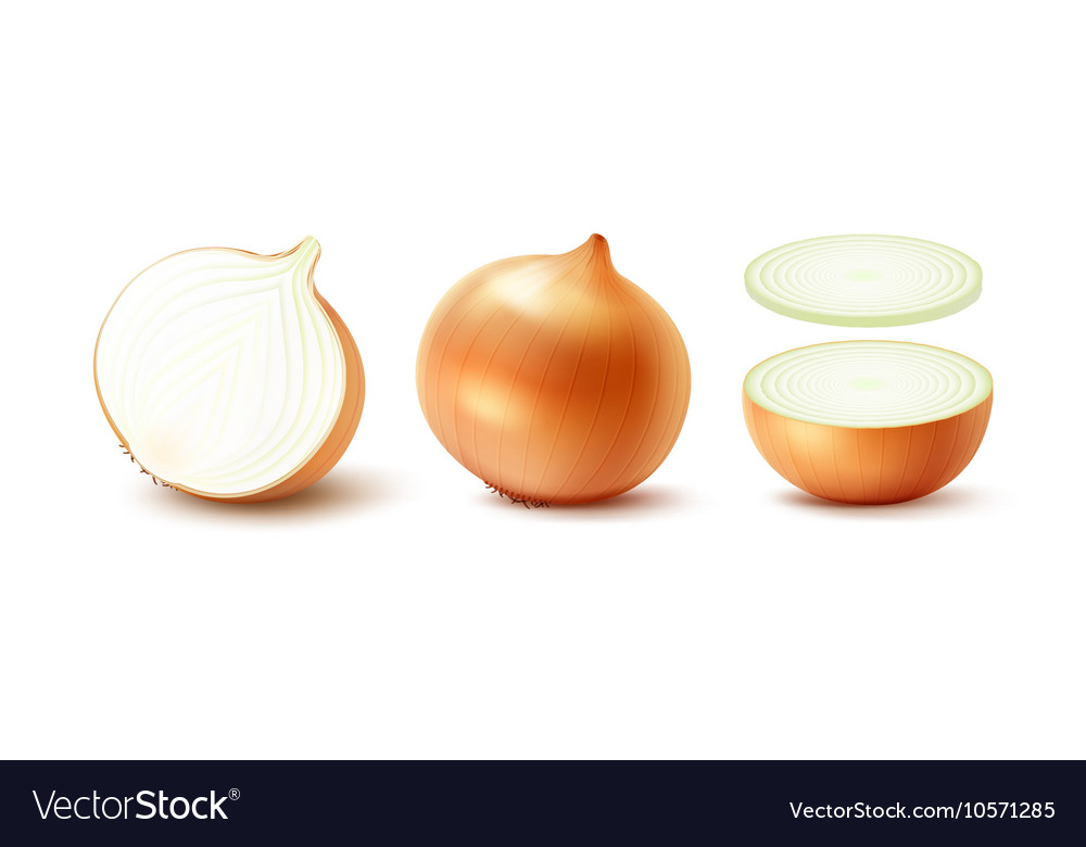 Set of whole and sliced yellow onion bulbs vector