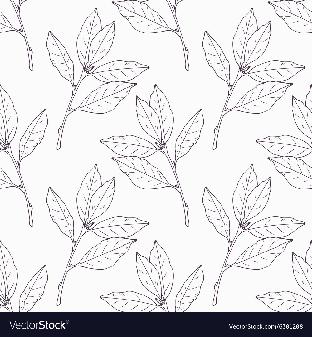 Hand drawn bay leaf and branch outline seamless vector