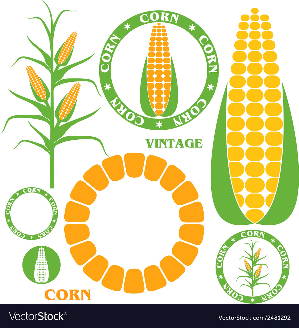Corn set vector
