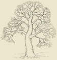 tree with bare branches vector image