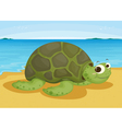 tortoise on sea shore vector image