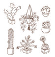 set of various houseplants vector image vector image