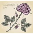 Valentine rose card vector image