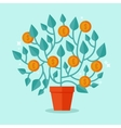 money tree concept in flat style vector image