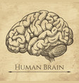 brain retro anatomic etching vector image
