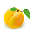 fresh peach vector image vector image