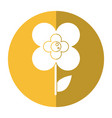 buttercup flower natural shadow vector image