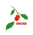 logo icon design coffee bean farm vector image