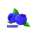 logo icon design blueberry farm vector image