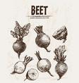 digital detailed line art beet vector image