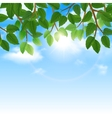 Green leaves and sky background border vector image