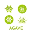 Agave plant green flower logo colorful vector image