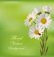 beautiful white daisies vector image