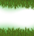 Fir Background vector image