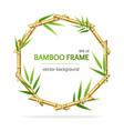 realistic 3d detailed bamboo shoots circle frame vector image