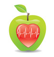 green apple for a healthy heart vector image