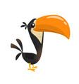 Funny toucan cartoon vector image