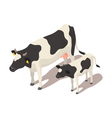 Isometric small and big cow vector image