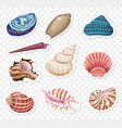 realistic sea shells stickers sset on the vector image