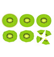 set of realistic sliced kiwi icons vector image