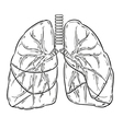 lungs sketch vector image