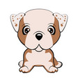 bulldog - vector image