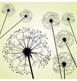 dandelions pale green vector image