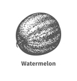 hand-drawn watermelon vector image