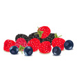 group of colored berries vector image