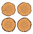 Tree rings and saw cut tree trunk vector image
