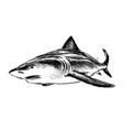 Hand sketch shark vector image