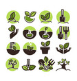 tree planting and green gardening horticulture vector image