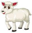white lamb on white background vector image