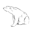 Hand sketch sitting polar bear vector image