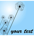 dandelions pale blue vector image
