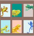 frog cartoon tropical animal cartoon nature cards vector image