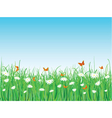 butterflies daisies vector image