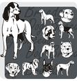 Dog Breeds - set vector image
