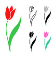 set of tulips flowers vector image