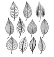 Set of abstract isolated leaves vector image