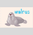 flashcard animal with walrus vector image