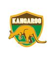 kangaroo sports mascot shield vector image