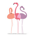 varicoloured flamingos on a white background vector image