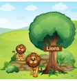 A signboard posted in a tree and the two lions vector image