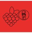 cartoon chef gourmet grape vector image