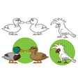 Pets parrot cockatoo and duck vector image