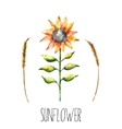 Watercolor sunflower and spica vector image