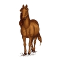 Strong brown arabian horse mustang portrait vector image